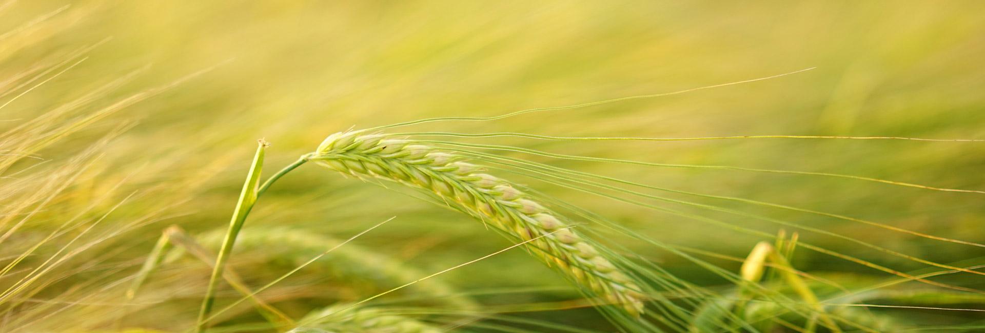 Klima-Bauern - das Projekt