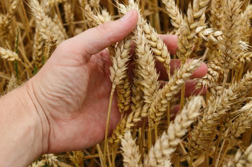 Klima-Bauern-Beispielgalerie-11