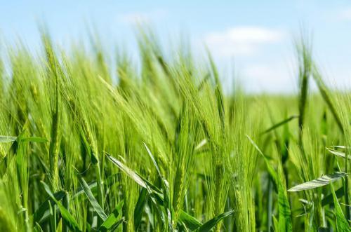 Klima-Bauern-Beispielgalerie-2